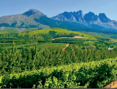 Winelands outside Cape Town
